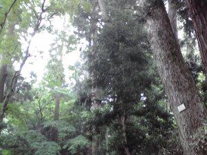 Hiraizumi_084_004